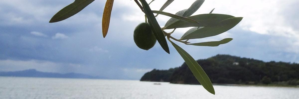 おいでよ!オリーブアイランド小豆島